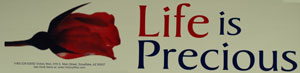 PRO-LIFE BUMPER STICKER Life Is Precious.